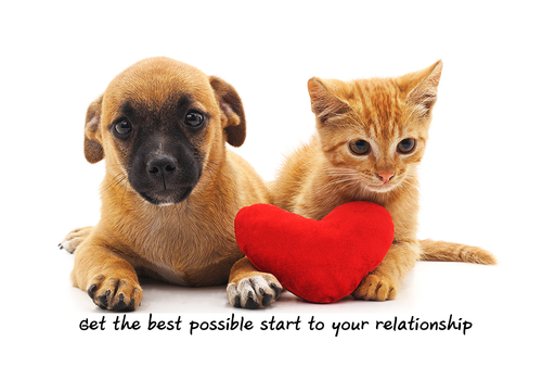 pre marriage counselling image puppies with heart